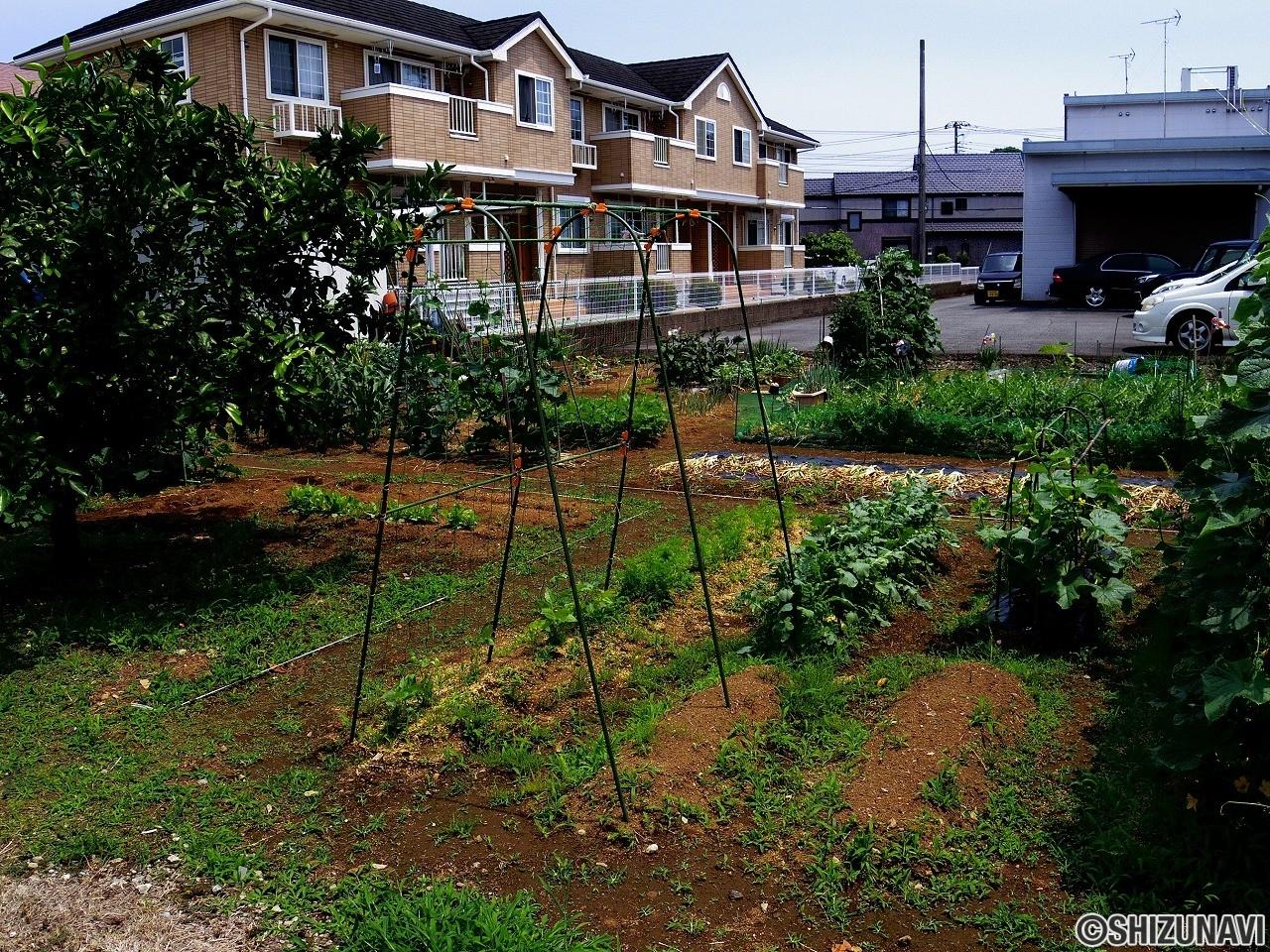 三島市安久住宅用地、約50坪の本地と約37坪の通路
